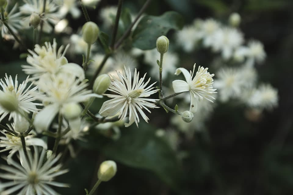 Fleur de Bach-Accompagnement adulte