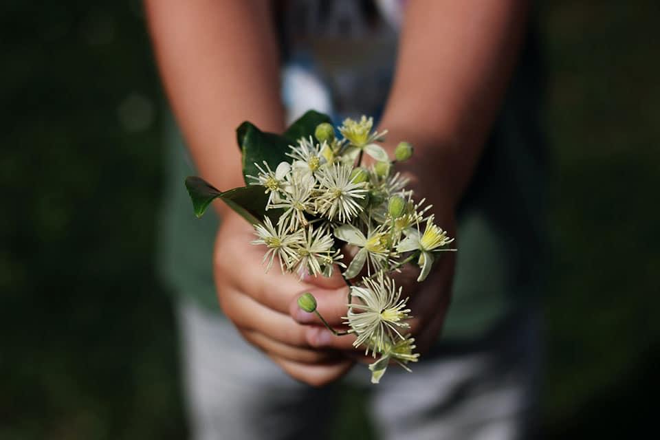 Fleur de Bach-Accompagnement parent enfant